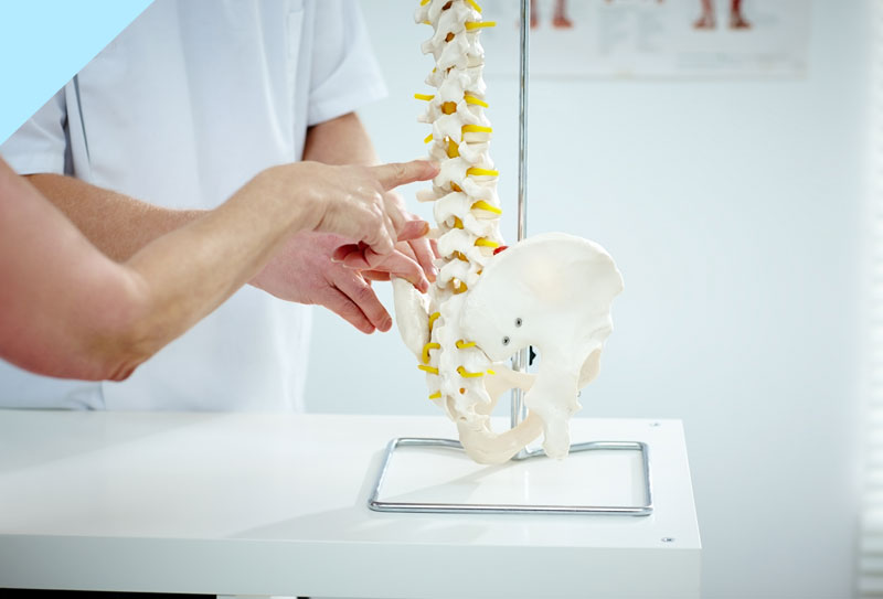 A patient and a doctor discussing an injury using a spinal model.
